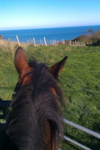 Hooli and lop sided horizon